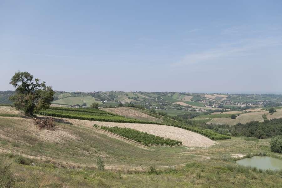 Cantina Visconti - Vigne