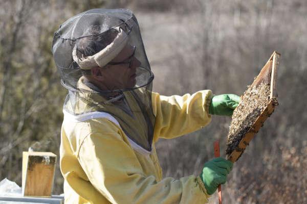 Miele piacentino - apicoltore