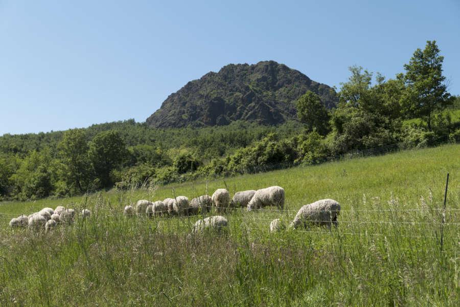 Piacenza il territorio - val Trebbai - pascoli