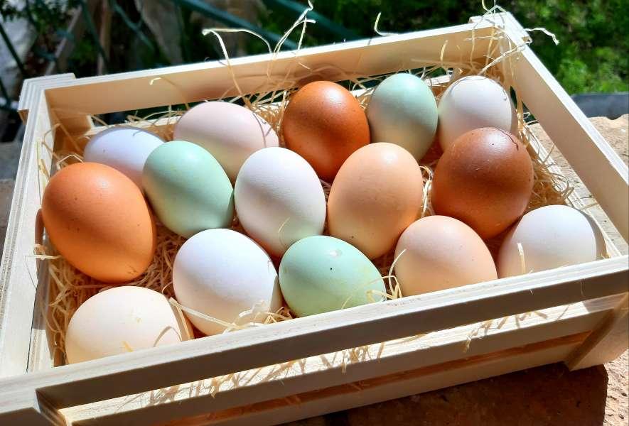 Azienda Agricola Biofilia - uova