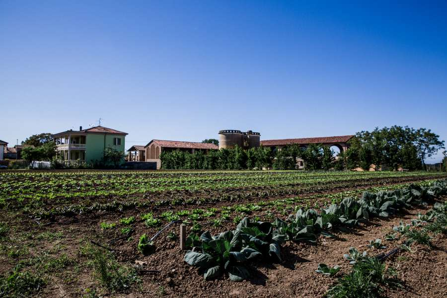 Azienda Agricola il Monastero - terreno