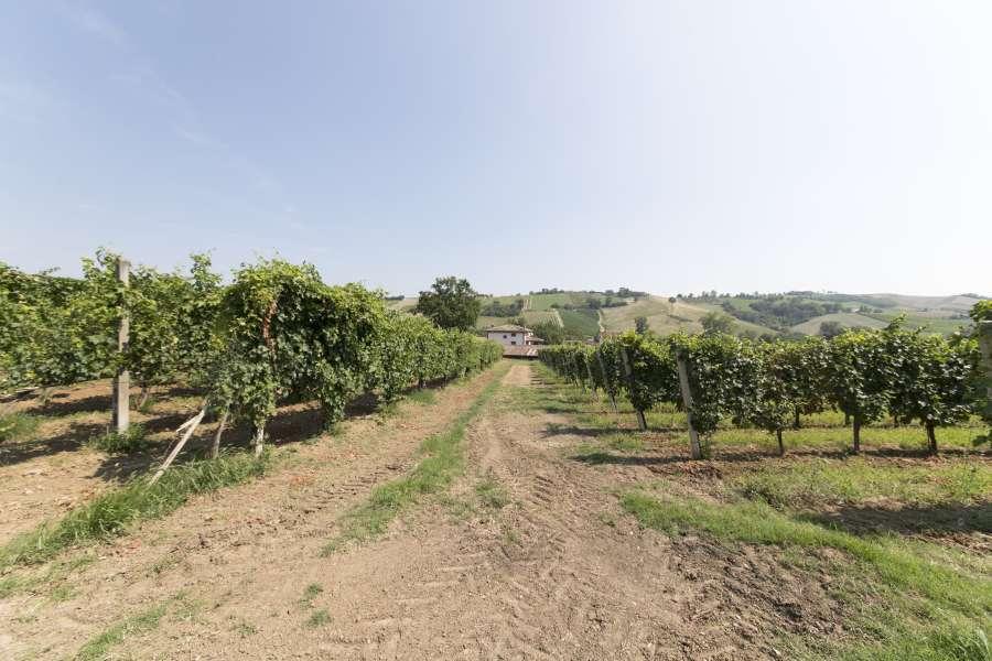 Azienda_Agricola_Il_Casello - vigna