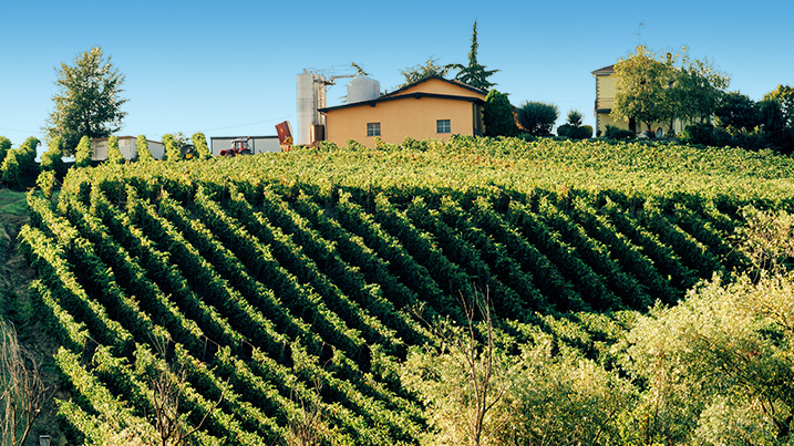 foto Azienda Agricola Casamiglio La Pioppa