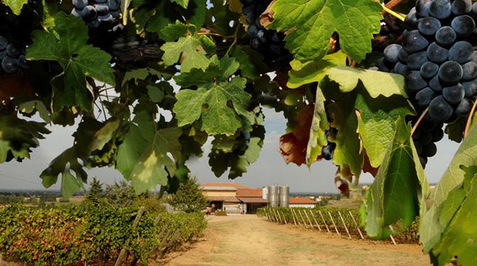 zienda Agricola Casamiglio La Pioppa - foto azienda 2